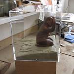 lucy im kasten, knetmasse, acrylglaskasten, ansicht im atelier, 2011