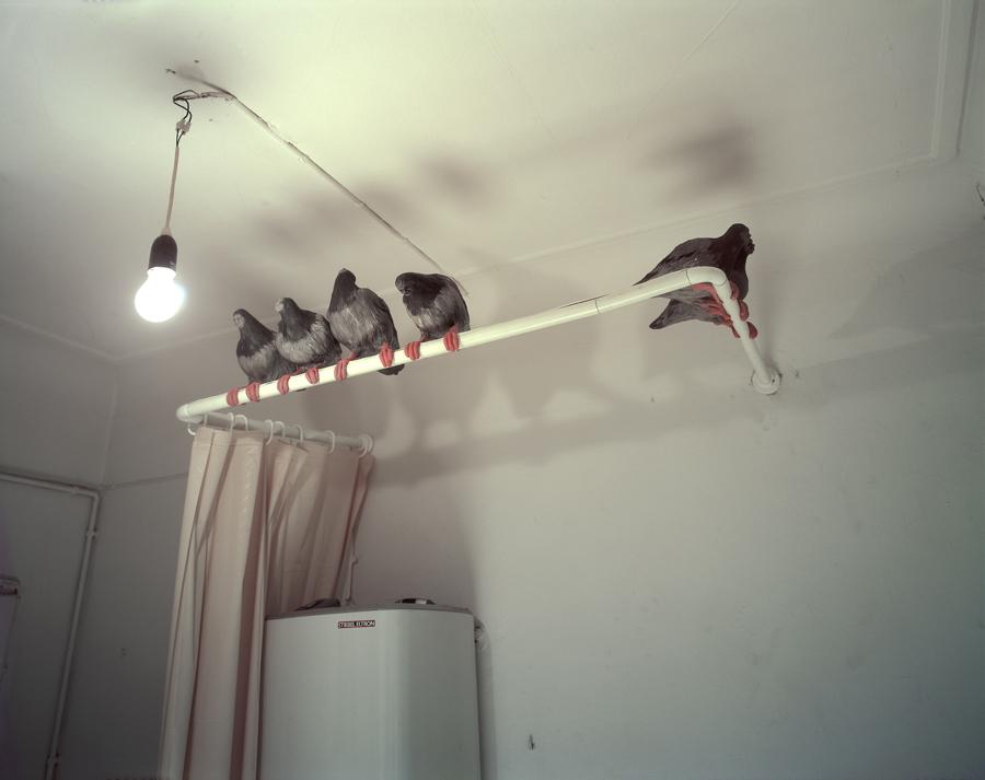 """Tauben aus """"Holde Vögel …"""" im Pumphaus, Hamburg, 2000."""